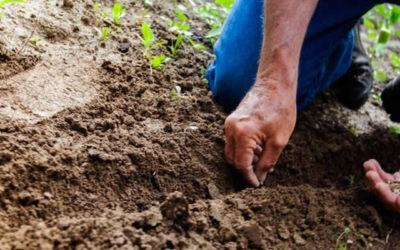 Domingo 15 – A | Siembra y cosecha