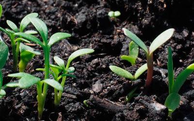 Domingo 16 – A | Siembra y cosecha